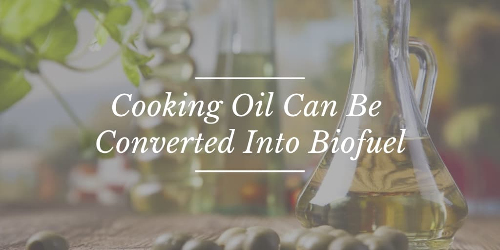 Cooking Oil Can Be Converted Into Biofuel