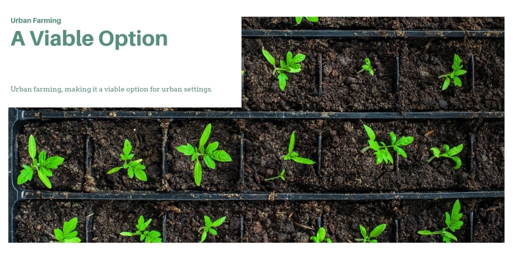 Urban Farming: A Viable Option