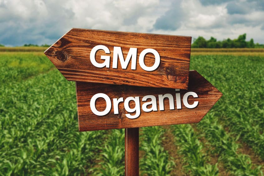 What is GMO and Why Is It In Your Food