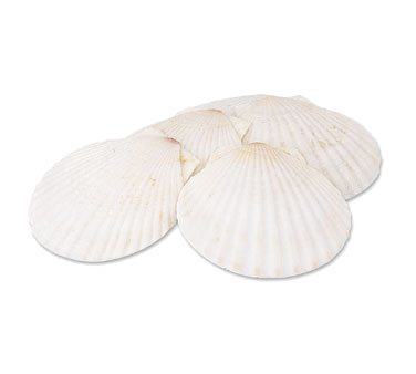 Alegacy Foodservice Products 663 Baking Shell